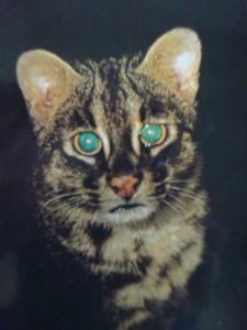 cat12-2-16